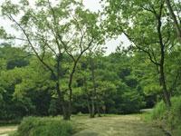 スノーピーク箕面自然館/スノーピーク箕面キャンプフィールド・写真
