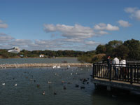 昆陽池公園・写真