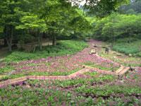 六甲高山植物園・写真