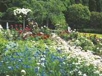 西宮市北山緑化植物園