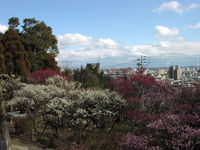 岡本公園・写真
