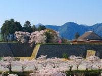 篠山城大書院の桜