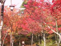 瑞宝寺公園 有馬の紅葉