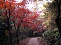 龍野公園紅葉谷・写真