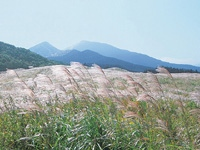 曽爾高原のススキ・写真