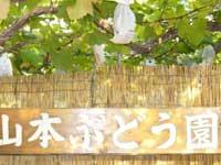 山本観光ぶどう園・写真