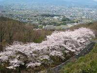 高円山・写真