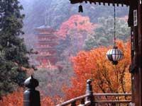 長谷寺の紅葉・写真