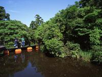 浮島の森・写真