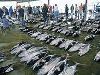 勝浦漁港魚市場
