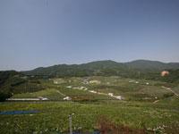 有田巨峰村・写真