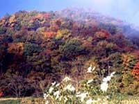 奥の嵐山・写真