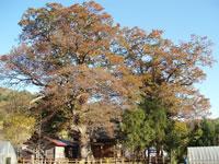 霜畑八幡宮・写真