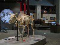 牛の博物館・写真