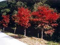 大滝川森林公園・写真