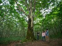 イーハトーヴォ安比高原自然学校・写真
