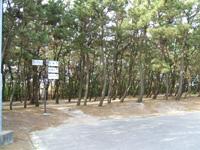 北栄町お台場公園・写真