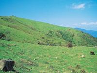 アカハゲ山