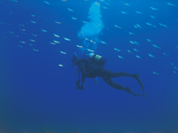 海士ダイビングサービス・写真