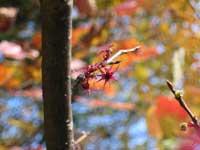 岡山県立森林公園・写真