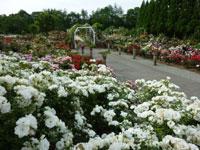 湧永満之記念庭園・写真