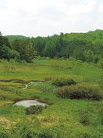 八幡湿原・写真
