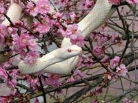 白蛇今津観覧所・写真