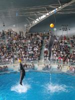 下関市立しものせき水族館 「海響館」・写真