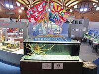 モラスコむぎ〜貝の資料館&漁師さんの水族館〜・写真