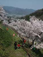 金竜山公園・写真
