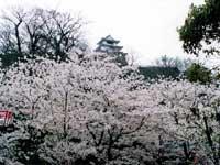 亀山公園・写真