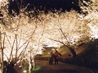 桃陵公園の桜・写真
