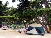 鬼ヶ島松原キャンプ場・写真
