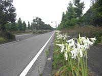 南レク街路(主要地方道 宇和島下波津島線)・写真