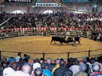 宇和島市営闘牛場・写真
