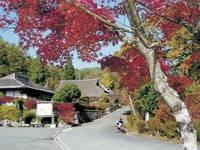 久万高原ふるさと旅行村・写真