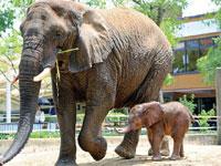 愛媛県立とべ動物園・写真