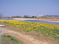 重信川河口・写真