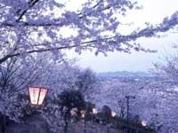 鹿ノ子池公園の桜・写真