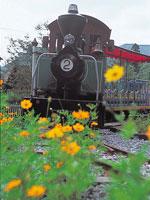 森林鉄道・写真