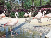 久留米市鳥類センター・写真