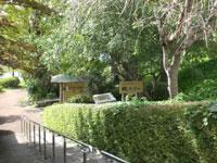 高清水桂葉清水公園
