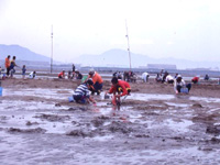 長井浜海水浴場(潮干狩り)