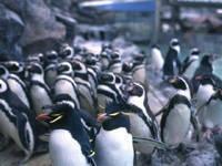 マリンピア松島水族館