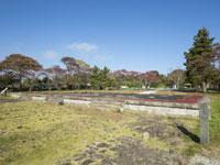 多賀城政庁跡・写真