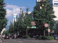 広瀬通り・写真