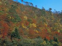 小黒ヶ崎の紅葉・写真