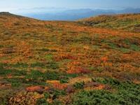 栗駒山の紅葉・写真