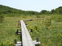 世界谷地原生花園・写真