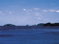 志津川湾・写真